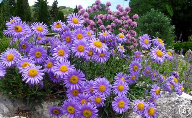 Редкие и краснокнижные растения Тульского края