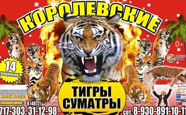 Суматранские тигры