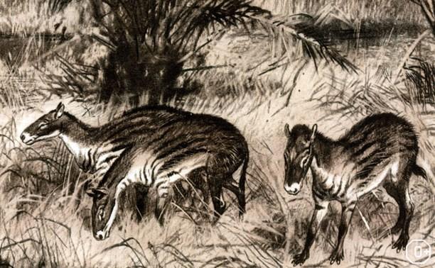 Лошадь. Equus. Hippos