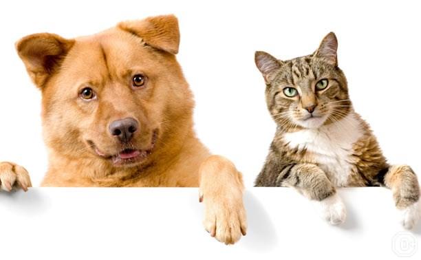 День кошек и День собак