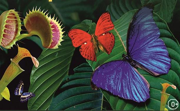 Живые тропические бабочки и хищные растения