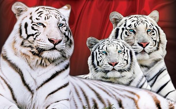 Тайны белых тигров