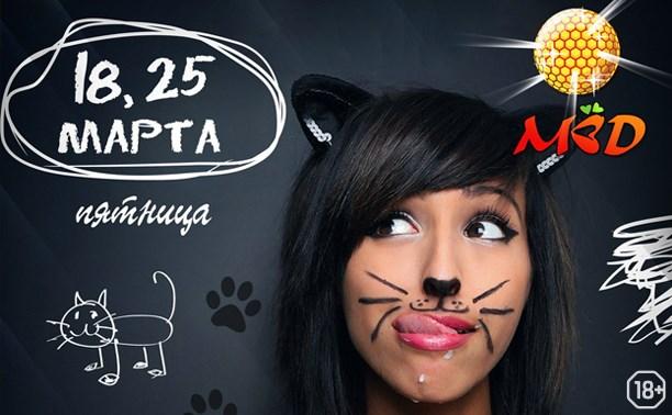 Кошки и коты: мартовское безобразие