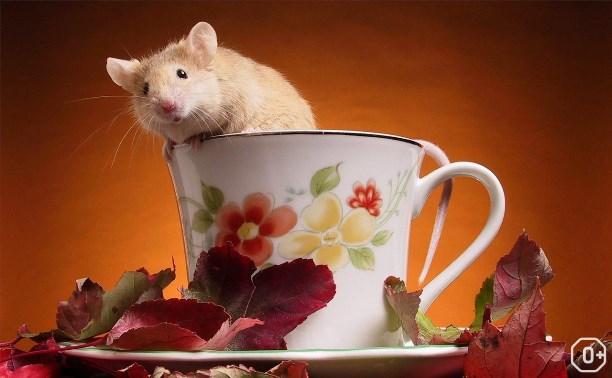Мышонок Мыцик