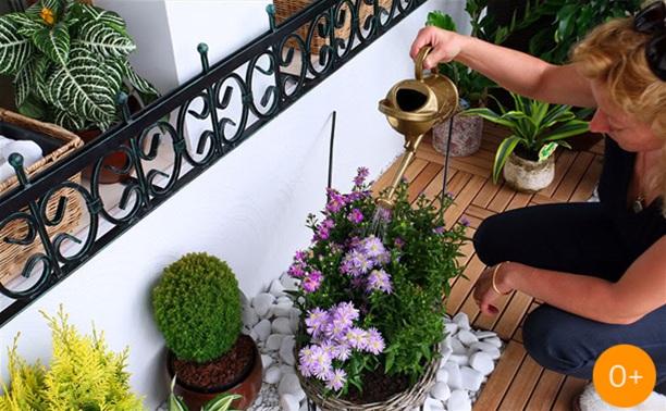 Сажаем цветы на усадьбе Смидовичей