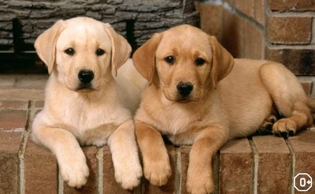 Региональная и Всероссиская выставка собак