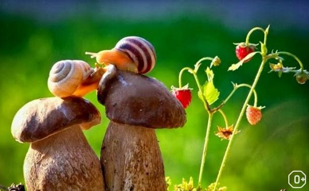 День грибника и грибов