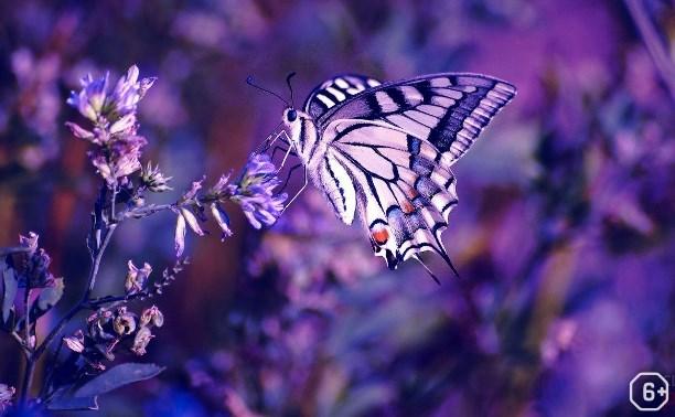 Бабочки, мастер-класс