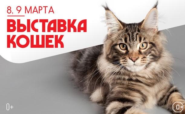 Выставка кошек, посвященная памяти Наталии Ветровой