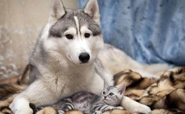 Животные и Человек: всегда рядом, всегда вместе!
