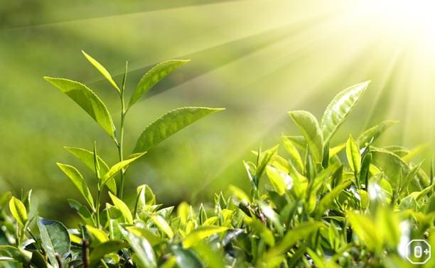 День растений