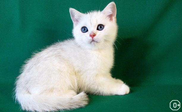 Пряничные кошки, XIII сезон