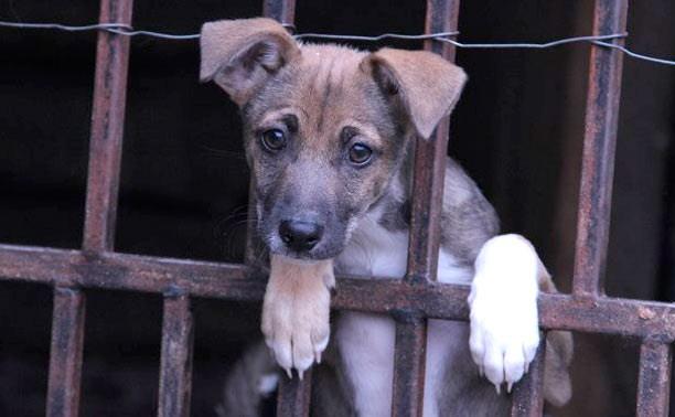 Субботник в центре помощи бездомным животным «Любимец»