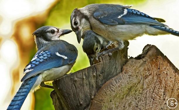 Семейная жизнь животных