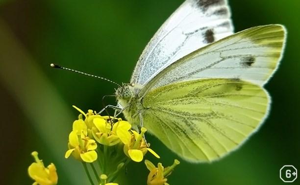 Куликово полеведение: Украшаем бабочек