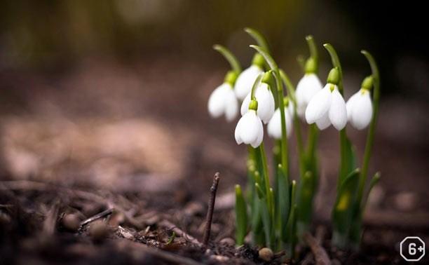 Весна в Музее П.Н.Крылова