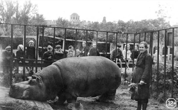 Зоопарки в военные годы