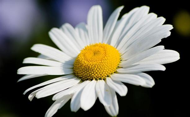 Литературно-музыкальные гостиные «Праздник Белого цветка», посвящённые Дню семьи, любви и верности