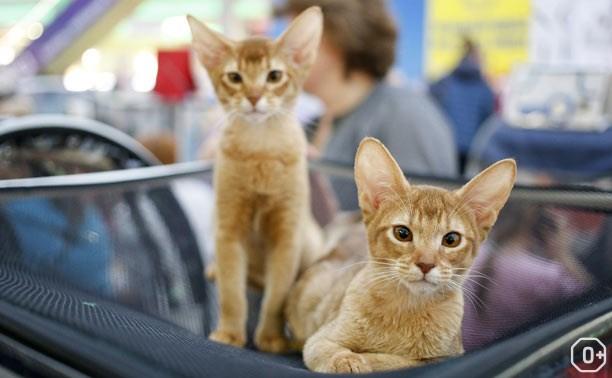 Выставка кошек «Кот учёный»