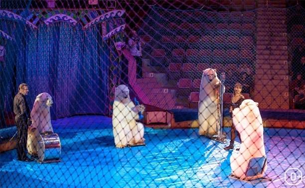 Белые медведи в тульском цирке