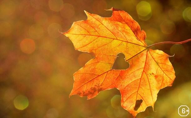 Программа «Осенины»