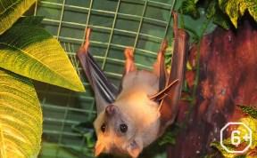 Ночь летучих мышей в Тульском экзотариуме