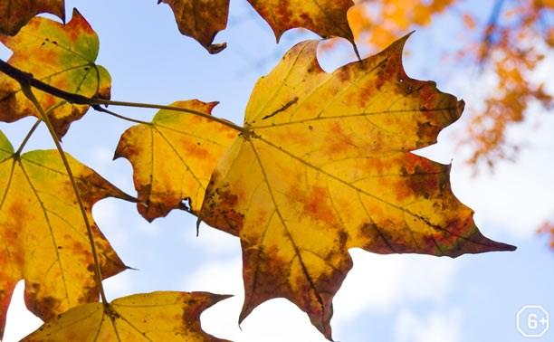 Интерактивная программа «Осенины»