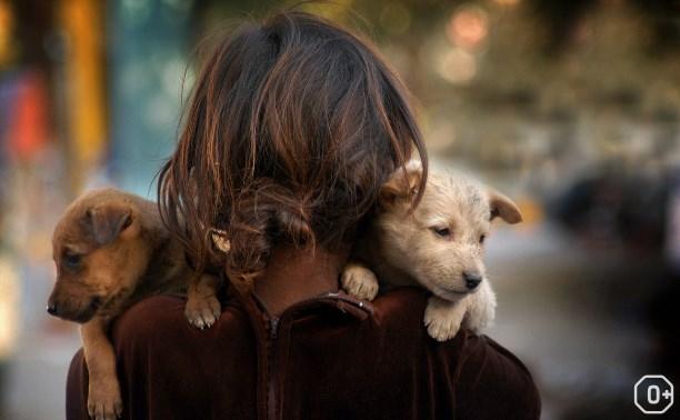 Благотворительный фестиваль помощи животным
