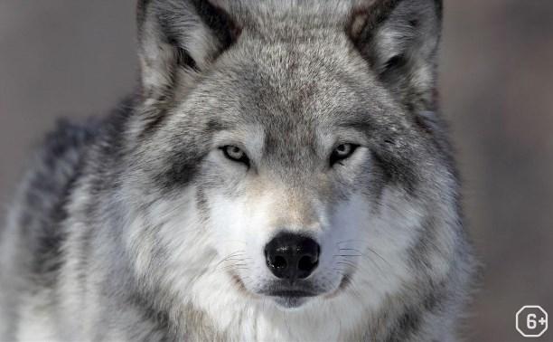 Кто самый страшный зверь в лесу?