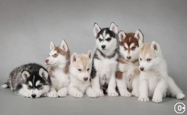 Выставка собак всех пород