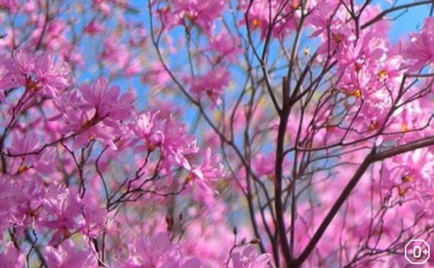 Празднование 8 марта в Тульских парках
