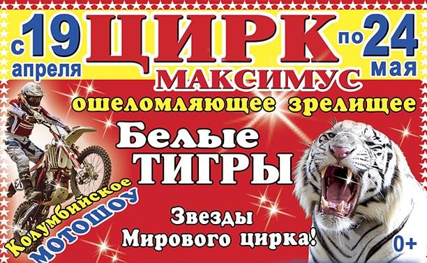 Цирк «Максимус»