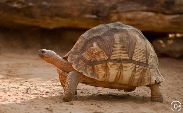 В поисках мадагаскарской черепахи