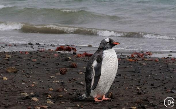 Жаркое лето Антарктиды
