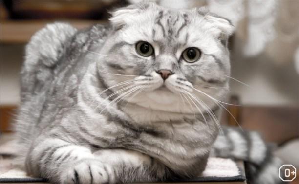 Пряничные кошки