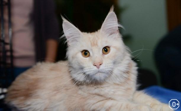 Пряничные кошки, XIV сезон