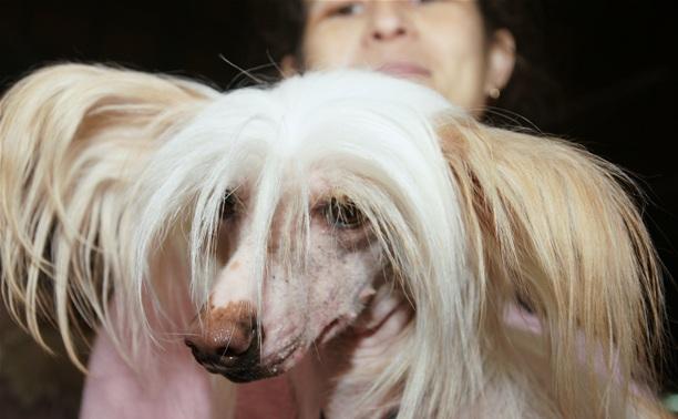 Всероссийская выставка собак