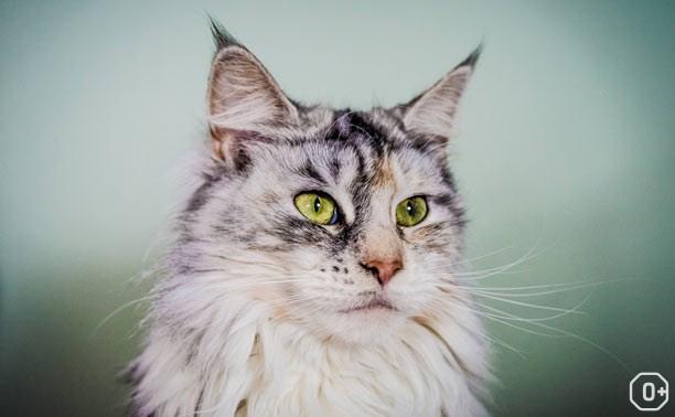 Новогоднее шоу «Международная выставка кошек»