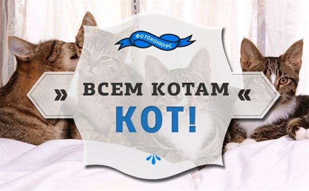 """""""Всем котам кот!"""": выбираем самого умильного!"""