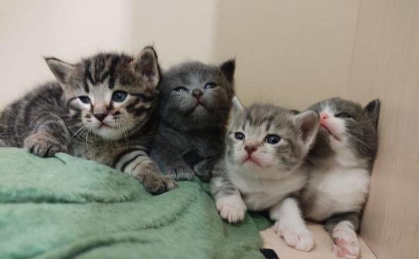Котята-милашки в добрые руки