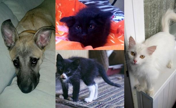 Панда, Евгений, Вжик и компания ищут дом!