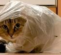 Стартовал фотоконкурс «Кот в мешке»