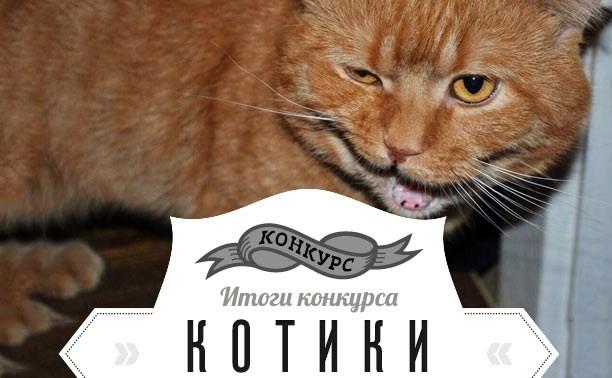 Котики: Объявляем победителя!