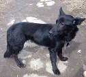 На Староникитской найдена собака
