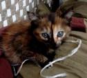 Маленькая кошечка срочно ищет дом