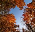 Выбираем понравившиеся кадры в фотоконкурсе «Осенний лес»
