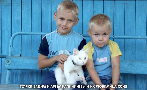 6 вопросов о кошках