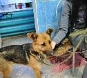 В Заречье найдена собака. Кто потерял?