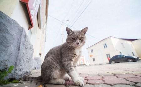 Чем могут заболеть кошки осенью?