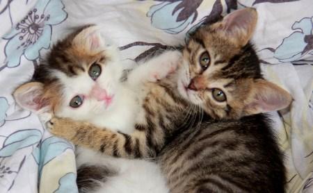 Две юные кошечки ищут дом